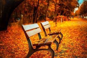 leere Bank im Herbst