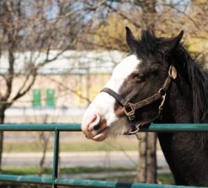 Pferd mit Duft, der sinnlich macht