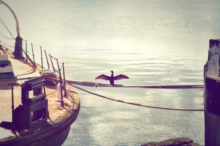 Möwe sitzt auf einem Seil zwischen zwei Schiffen