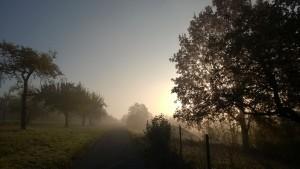 Nebel mit Landschaft