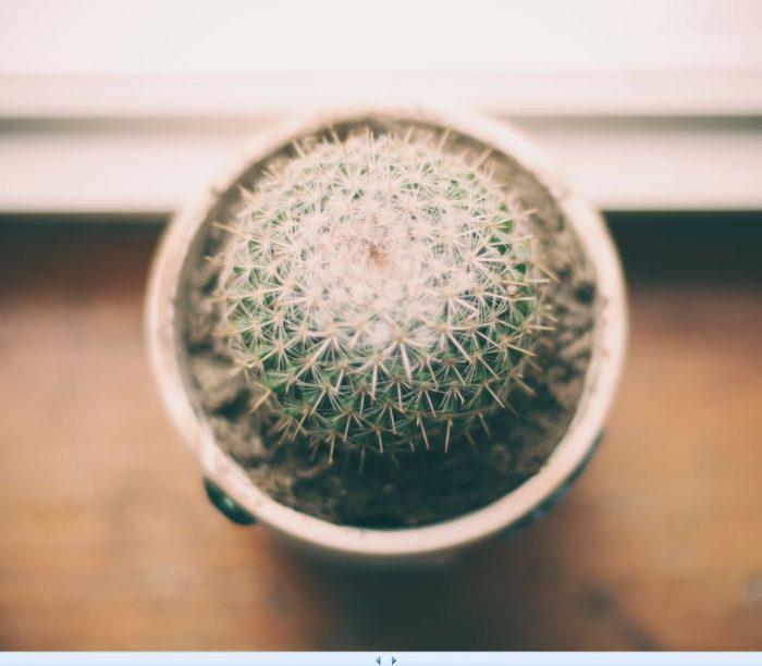 Kaktus als offener Brief