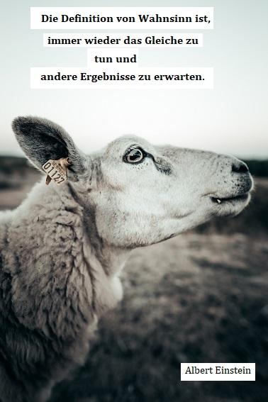 Ein Schaf guckt in die Welt