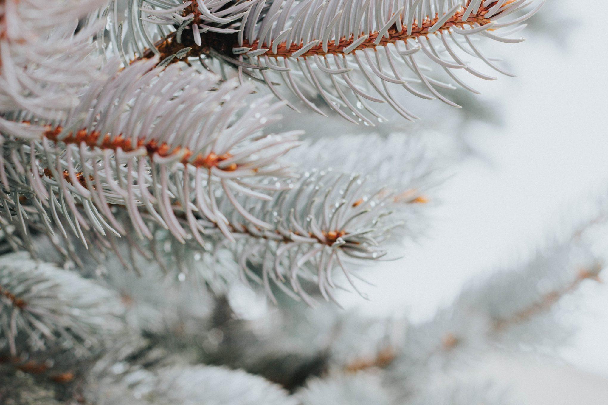 cordulas-adventskalender-schnee-auf-zweigen