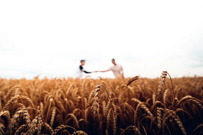 Fridays for future: ein Kornfeld, über dem sich zwei Männer die Hand geben