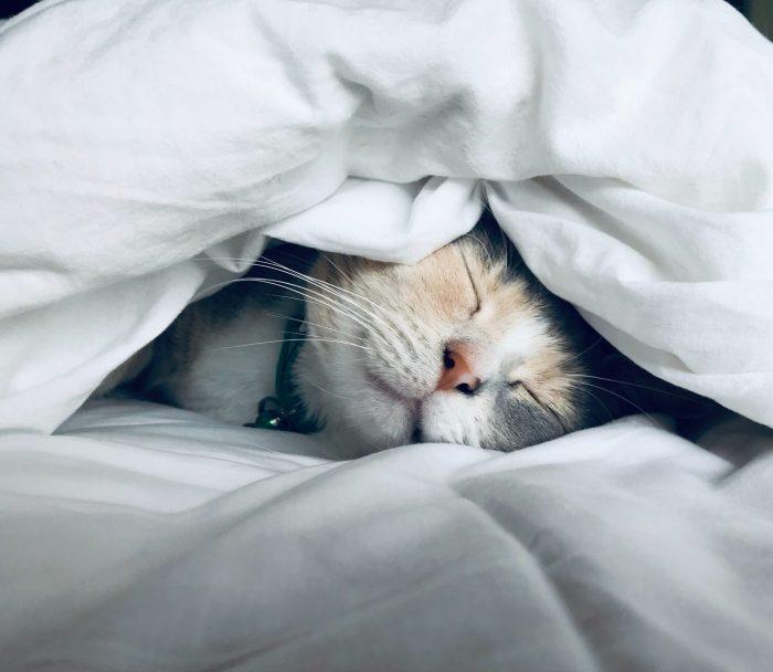 Katze schlafend im Bett