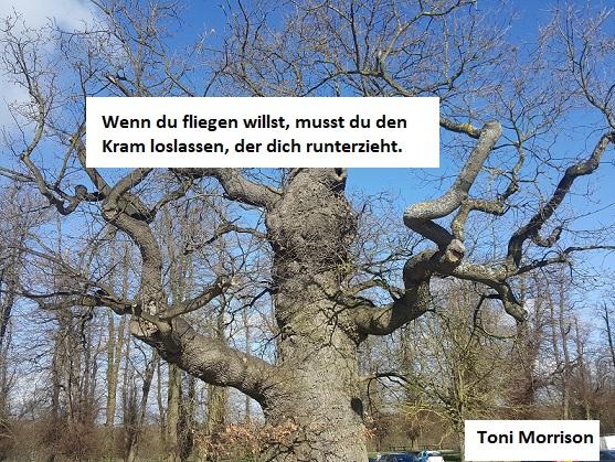 Ein Baum mit kahlen Ästen und blauem Himmel