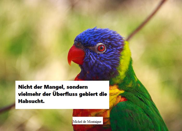 der-bunte-vogel-papagei