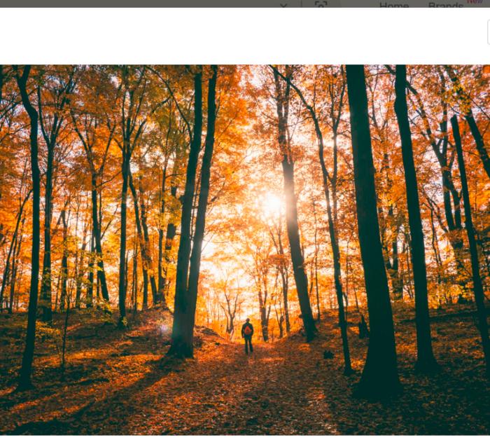 ein Männlein steht im Wald
